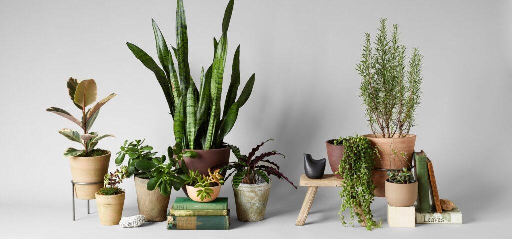 buy plants online india