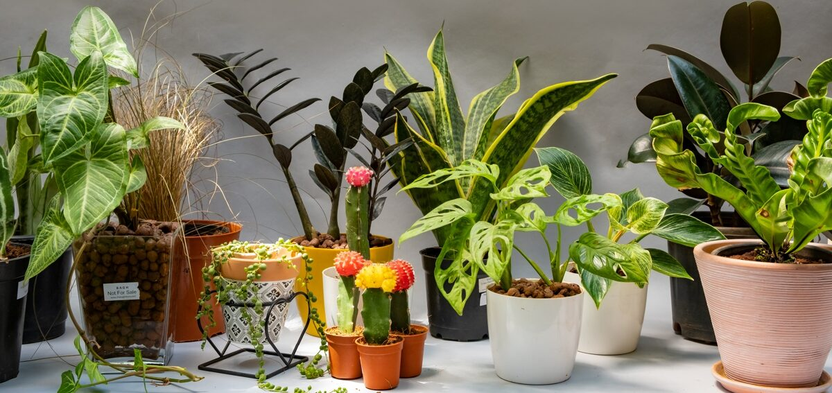 buy plants online india