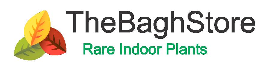 TheBaghStore - Online Indoor Plants Nursery